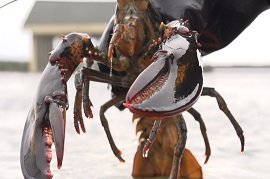 Concerns mount US lobster being shipped to China via Canada to avoid 25% tariffs
