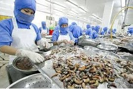 VIETNAM CEPHALOPOD EXPORTS TO THE U.S. RISE OVER 30%