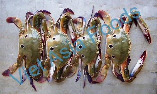 Fresh frozen Crabs suppliers