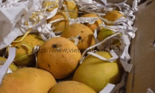 Frozen Mango distributors