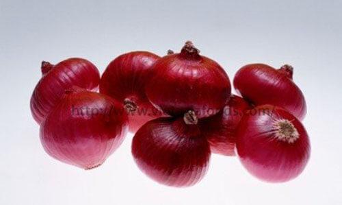 Frozen Onion distributors