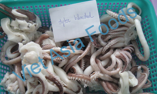 Frozen Broad Squid, Soft Squid, Bigfin Reef squid, Aori Ika distributors