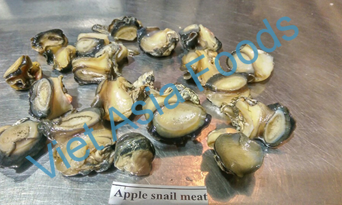 Frozen Apple snails distributors