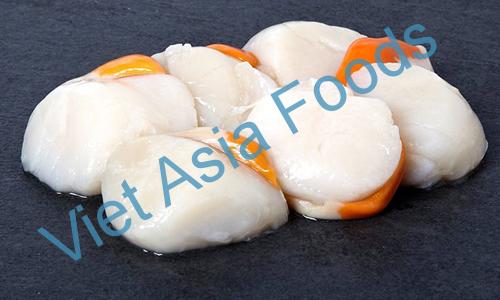 Frozen Scallop, Kaibashira distributors