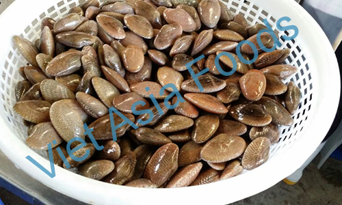 Frozen Yellow Clam suppliers