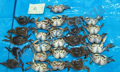 Frozen Rice Crab distributors