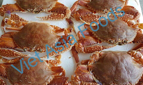 Frozen Whole & Haft-cut Swimming Crab distributors