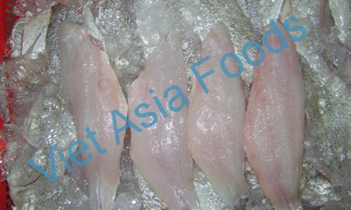Frozen Grouper distributors