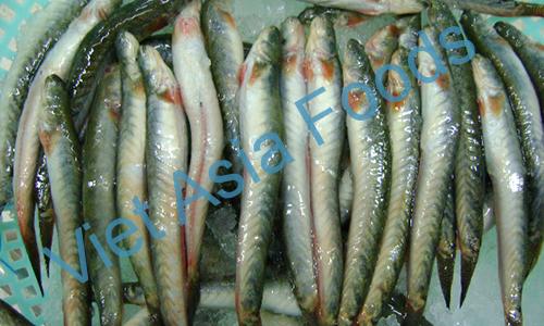 Frozen Keo Fish / Chiring distributors
