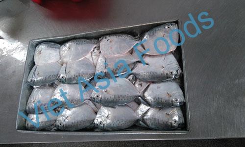 Frozen Moonfish distributors
