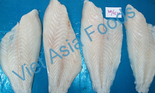 Frozen Parrot fish distributors