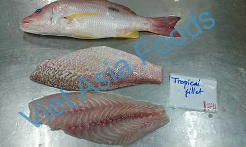 Frozen Red Snapper - Tropical Snapper - Yoko-Fuedai suppliers