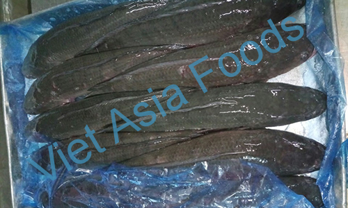 Frozen Snakehead fish - Mud fish – Showl distributors