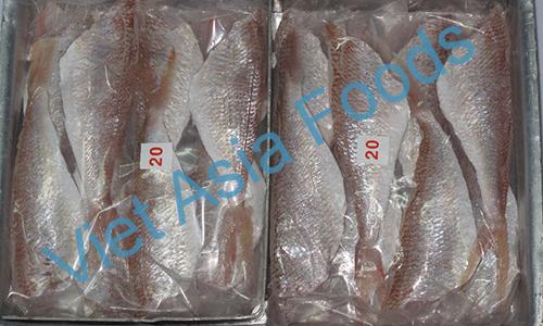 Frozen Threadfin Bream - Itoyoridai distributors