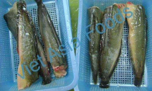 Frozen Yellow Catfish / Yellow Magur distributors