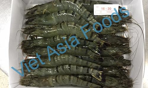 Frozen Black Tiger Shrimp distributors