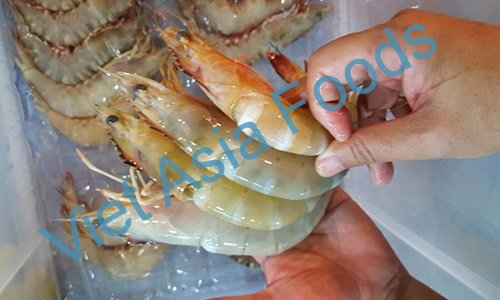Frozen Sea white Shrimp - wild caught distributors