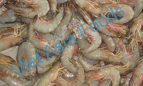 Frozen Sea Pink shrimp – Wild Caught distributors