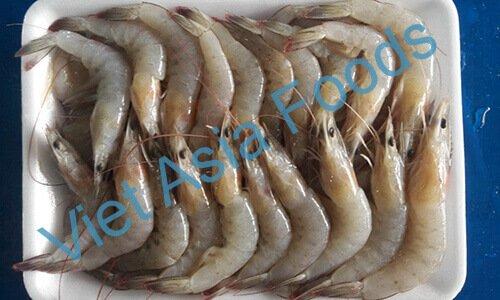 Frozen River shrimp distributors